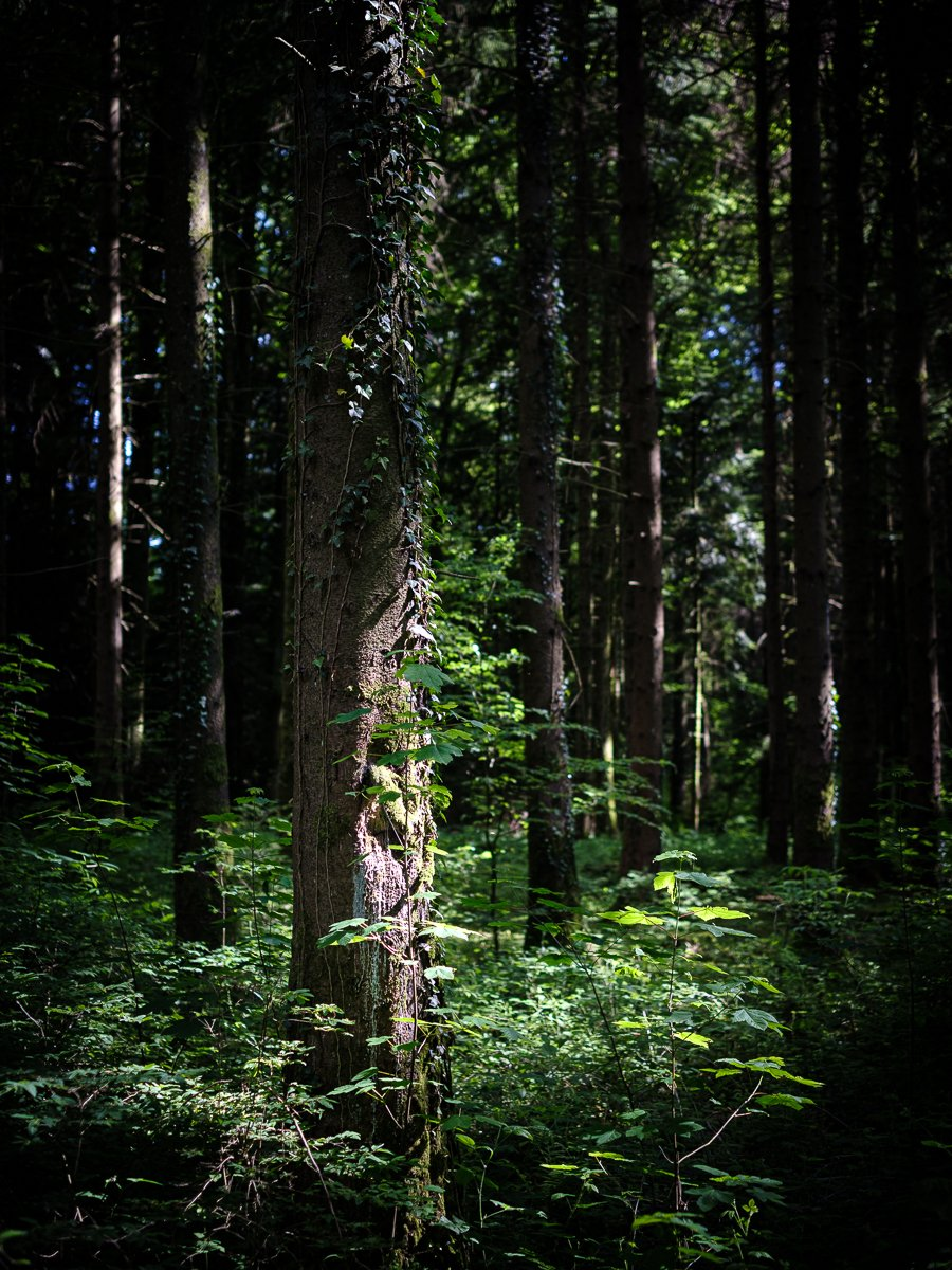 That ray of sun  #forest #tree #light #travelphotography #landscapephotography #fujixt3 #fujinon35mm #fujifilm #fujifilm_ch #Switzerland #Suisse  #IgersLausanne #MyVaud #MySwitzerland #Swissphotographer #royalphotographicsociety #rpsdocpic.twitter.com/TTd5GPeZrh
