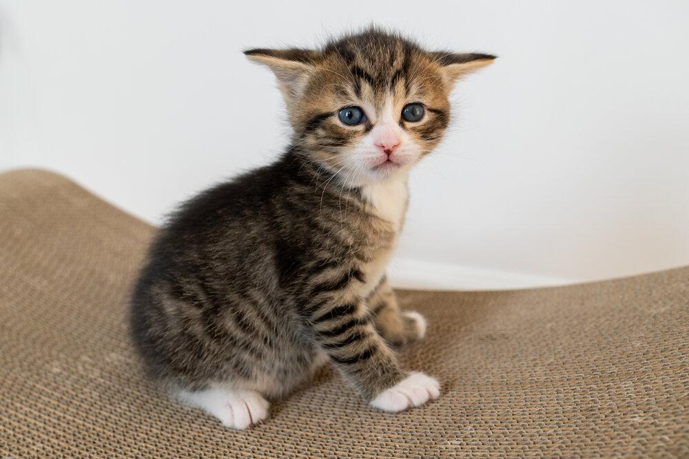 """The smallest feline is a masterpiece."" -- Leonardo da Vinci <br>http://pic.twitter.com/SyTPETx4Kc"