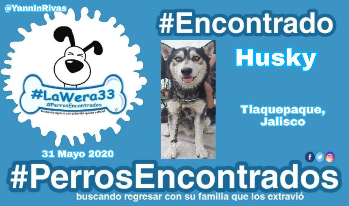 🙏🏽 RT para localizar a su familia 👨👩👧  🆘♂️ #Encontrado perrito #Husky negro con blanco.  📌 #Tlaquepaque #Jalisco @YRiv  🐾#PerrosEncontrados 🐾  🆘 #LaWera33 @tlaquepaque @Tlaquepaquehnos @tlaquepaque https://t.co/7VuDnzeoPf https://t.co/XBMJy4BgyX