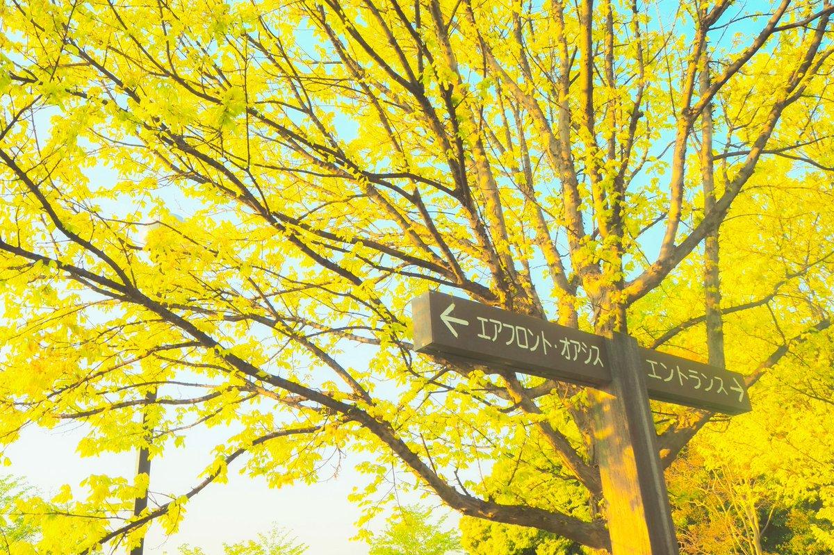 ┈  ┈  ┈ 初夏 ┈  ┈  ┈   #photo #photographer #photo_jpn #filmcamera #film_jp #filmphoto #filmphotography #film #olympus #omdem10markiii #雰囲気写真  #ミラーレス一眼 #レタッチ #カメラ #キリトリセカイ #フィルム #日常 #大阪カメラ部 #東京カメラ部 #関西写真部sharepic.twitter.com/maj5KbaMbJ