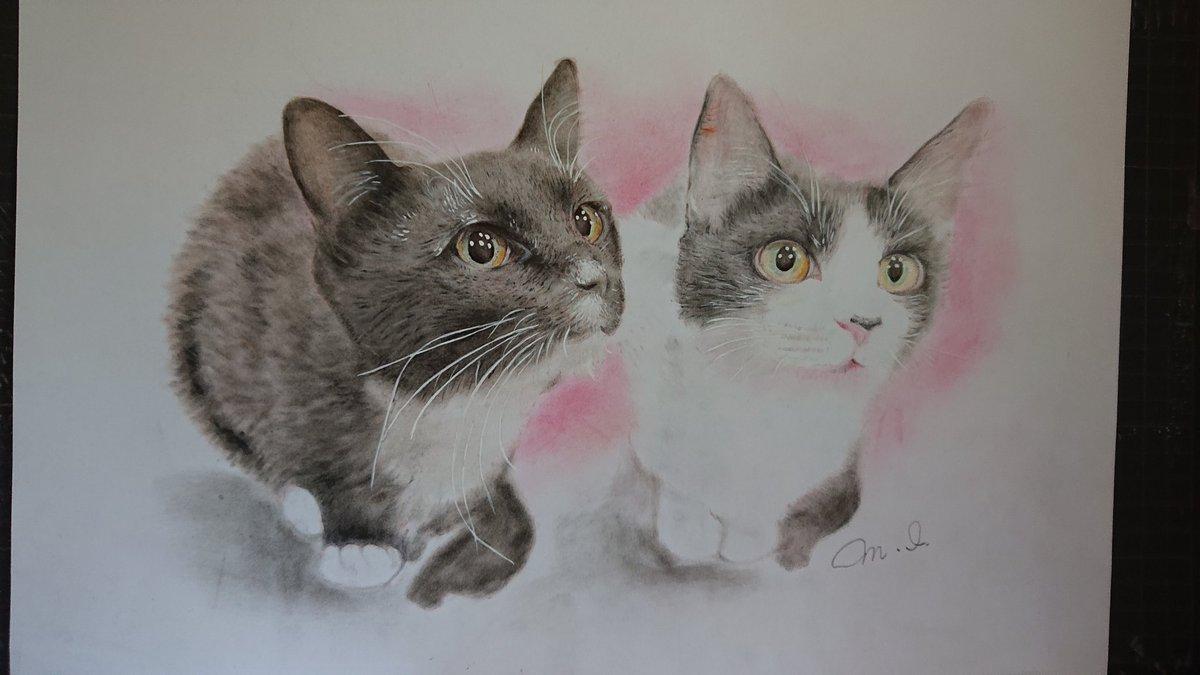 藤あや子さんの愛猫。可愛いかったので、描いて見ました。画材は、パステルと色鉛筆です❗