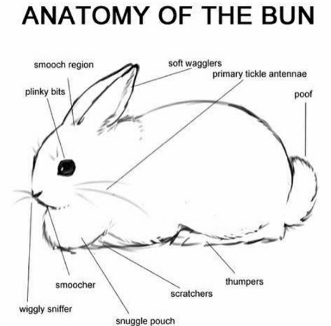 And for today's biology lesson...  #Science  #Bunniespic.twitter.com/clWbSppek2