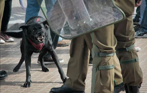 During this time of protest, I know we could all use an uplifting story. So I want to tell you about El Negro Matapacos, the heroic Chilean protest dog who hated the police.