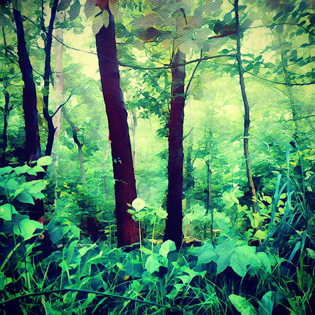 The Woods 31.05.20 #nature #sketchbook