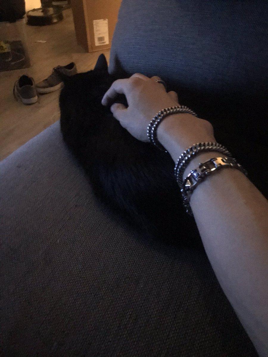 Gnight everyone. #cat #gnight #goodnight #survivor2020