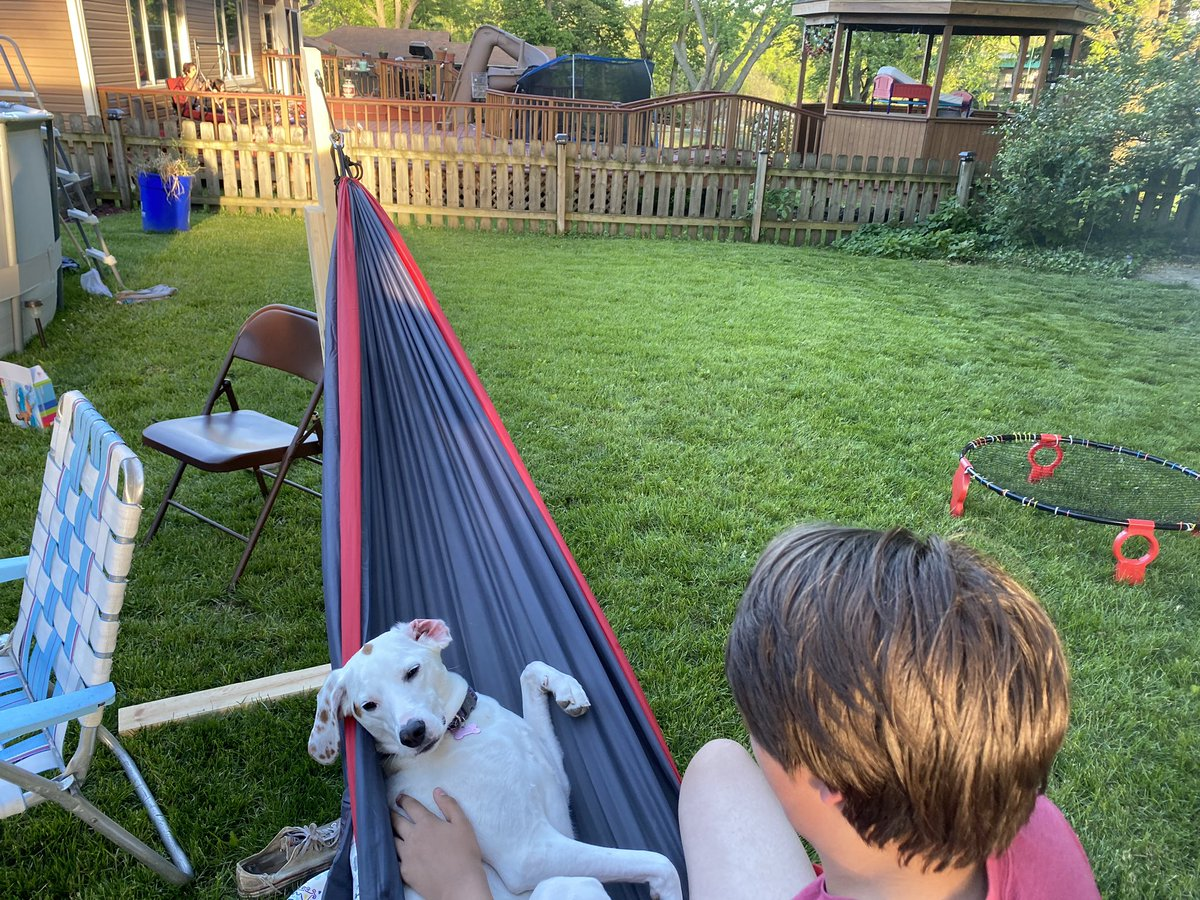 Pupdate: She has deigned to share the hammock with my nephew.