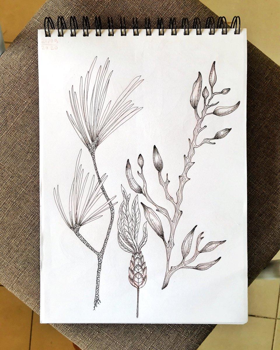 plants doodles : : : : #art #sketch #sketchbook #pencildrawing #Drawing #drawings #ink #inking  #inkdrawing #dailysketch #doodle #drawing #dailydrawing #artist #draw #sketching #artistsofinstagram #artworks #plants #artstagram #arttwit #ArtistOnTwitter https://t.co/v0weAbQuE9