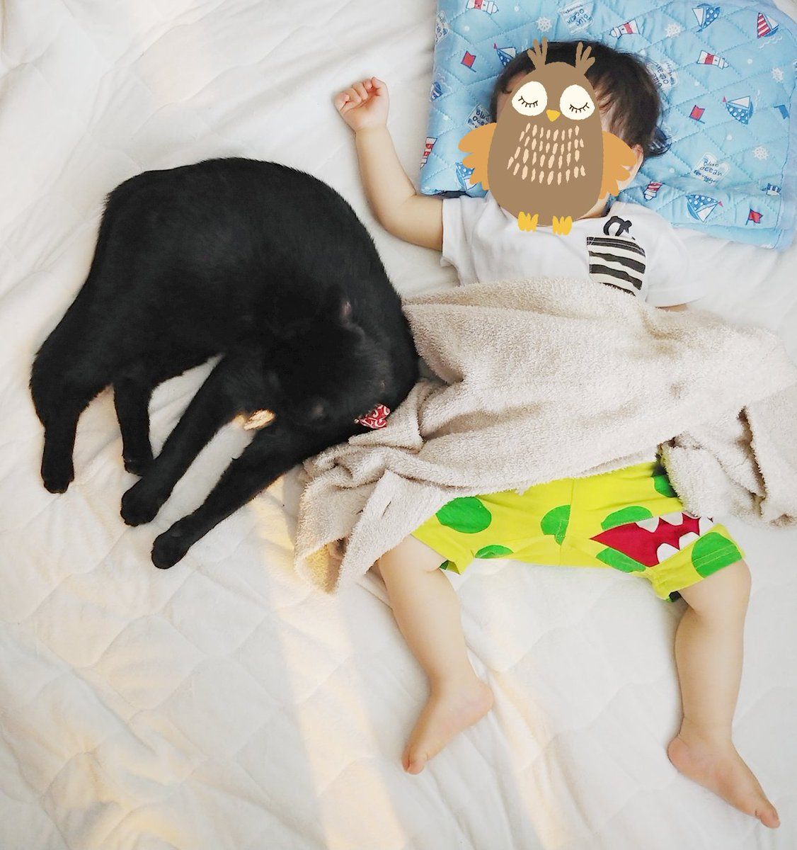 775日目。1歳児の右隣(写真向かって左)で一緒に添い昼寝していたところ、黒猫がやってきてウロウロしたあと1歳児との間にギュギュっと身体を押し込んできた。川の字になって暫く寝ていたが1歳児を残して起きようとすると黒猫はチラっとこちらを見たが空いたスペースに足と尻を伸ばしてそのまま寝た