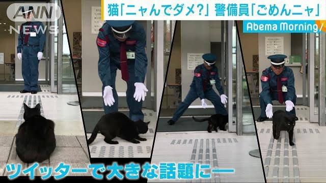 猫と警備員猫と警察官猫と和解せよ猫とマタタビ暗いニュースよりも↑のような