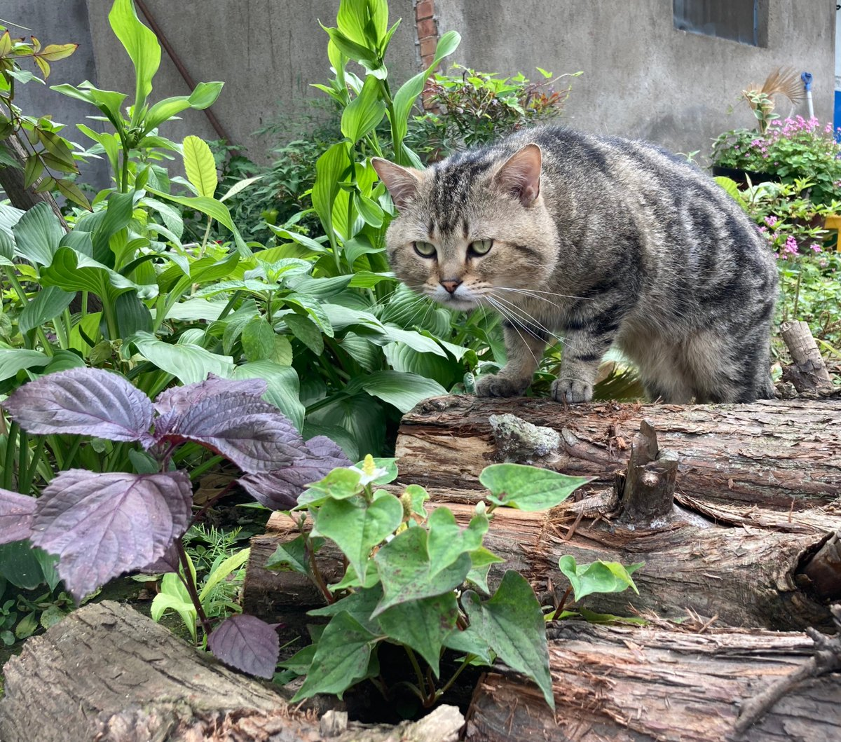 Stroll in the garden #cat pic.twitter.com/ELPxT9WVh4