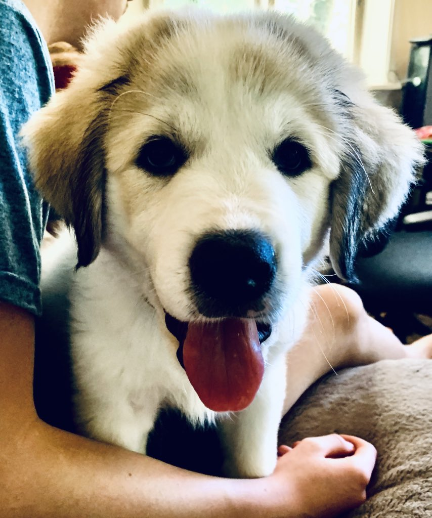 Thank you! At least I get to have therapy and cry about it. He does have a service puppy. She isn't trained yet, but hoping by the time she is 120 lbs she will take down the cops if they try to get him. Amazed I have all my teeth as I find I'm grinding my teeth constantly. pic.twitter.com/5TXGXWW64G