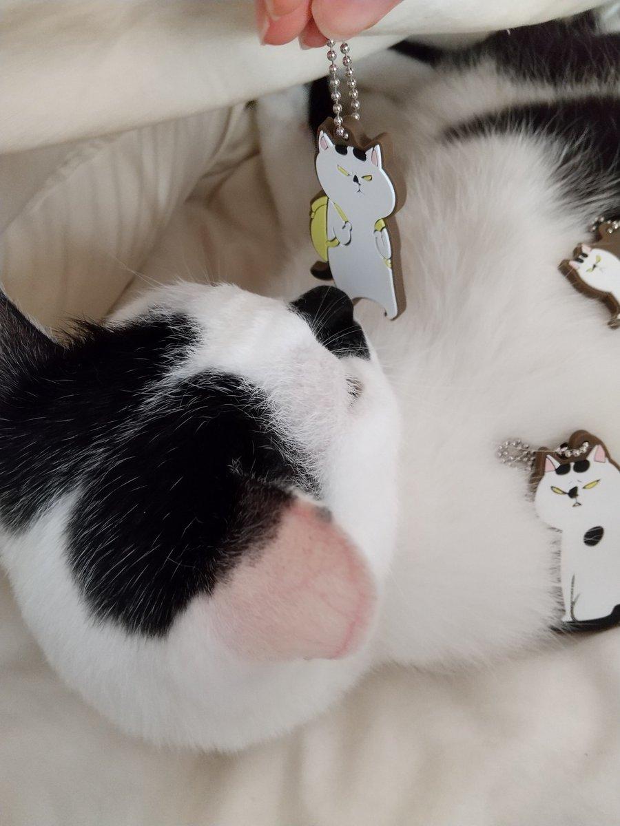 ガチャガチャ、ラバーマスコットも発売中。ゲットしたよ報告ありがとうございます~!ガシャポン商品情報 犬と猫どっちも飼ってると毎日たのしい カプセルラバーマスコット  http%3A%2F%