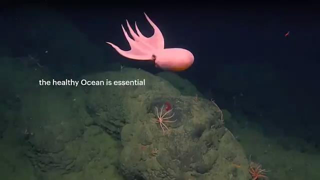 "Image for the Tweet beginning: ""A healthy ocean is essential"