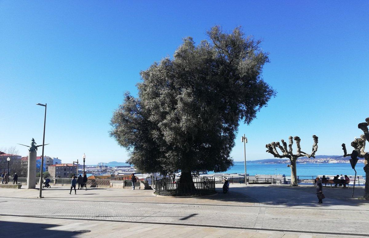 El #mirador del #Olivo es uno de nuestros sitios favoritos para contemplar la #RíadeVigo:  un lugar mágico, enclavado en pleno centro urbano, frente a una de las plazas más coquetas de la ciudad: A Praza da Fonte.  @turisriasbaixas @Turgalicia