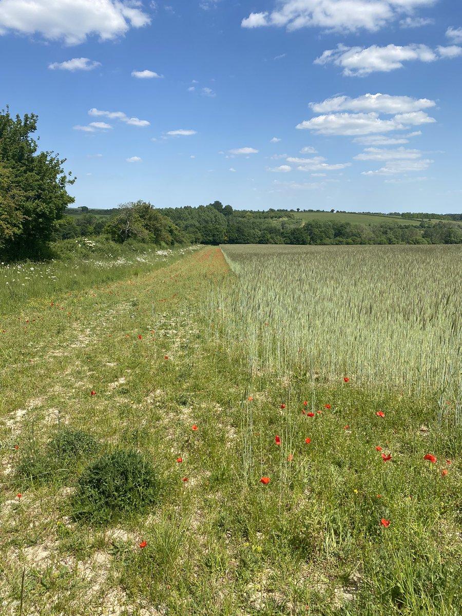 A great walk in the countryside yesterday #walk #sun @UnderArmourUK
