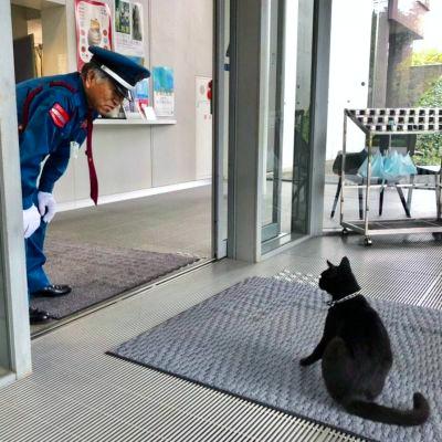 1000RT:【休館経て】話題の猫と警備員、2カ月ぶりに再会美術館に入ろうとする猫と、防ぐ警備員のやりとりで話題の尾道市立美術館。警備員はマスクを着けていたが、普段通りに甘えてきたという。