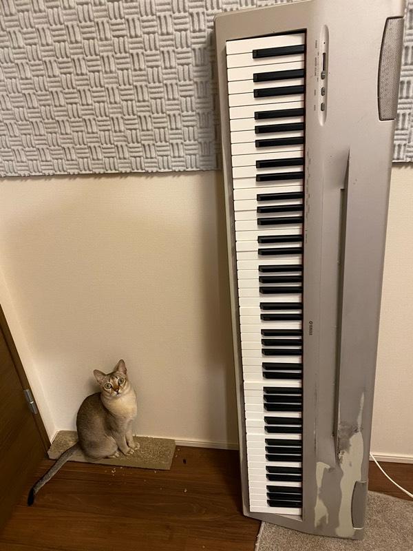 16年くらい使い続けた電子ピアノを買い替えました。まだ使えるけど、何鍵か戻りが遅いので最初で最後、親に借金して買った88鍵盤。このキーボードでたくさんの曲を作ったなあ。切ない。で、邪魔なんだけどどうしようかな。