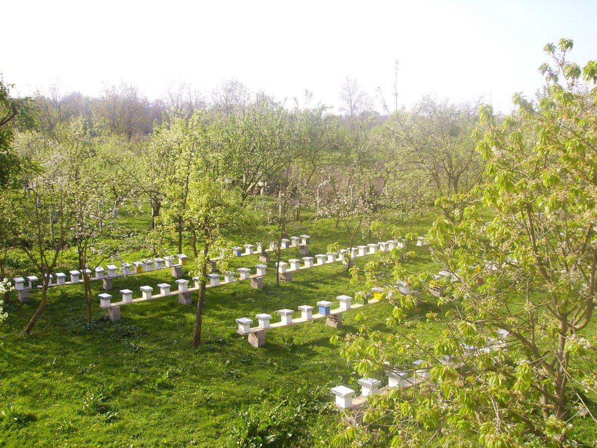 """ I love the majesty of human suffering. ""   ~ A Vigny  #Bees  #Garden #Essence #Life #Hobbies #Pollen #Lukova #Elixir #Mepic.twitter.com/SypO7MRThO"