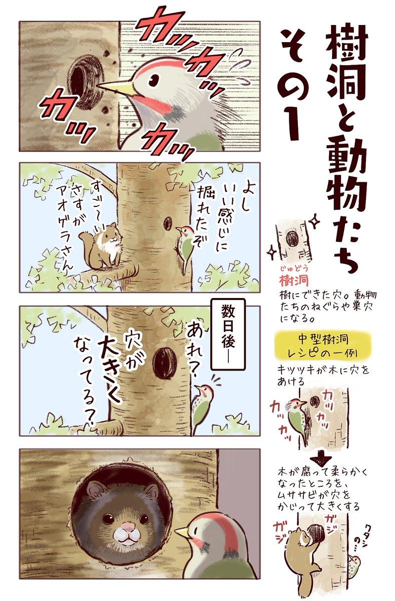 わいるどらいふっ!第179種樹洞と動物たちのフシギな関係