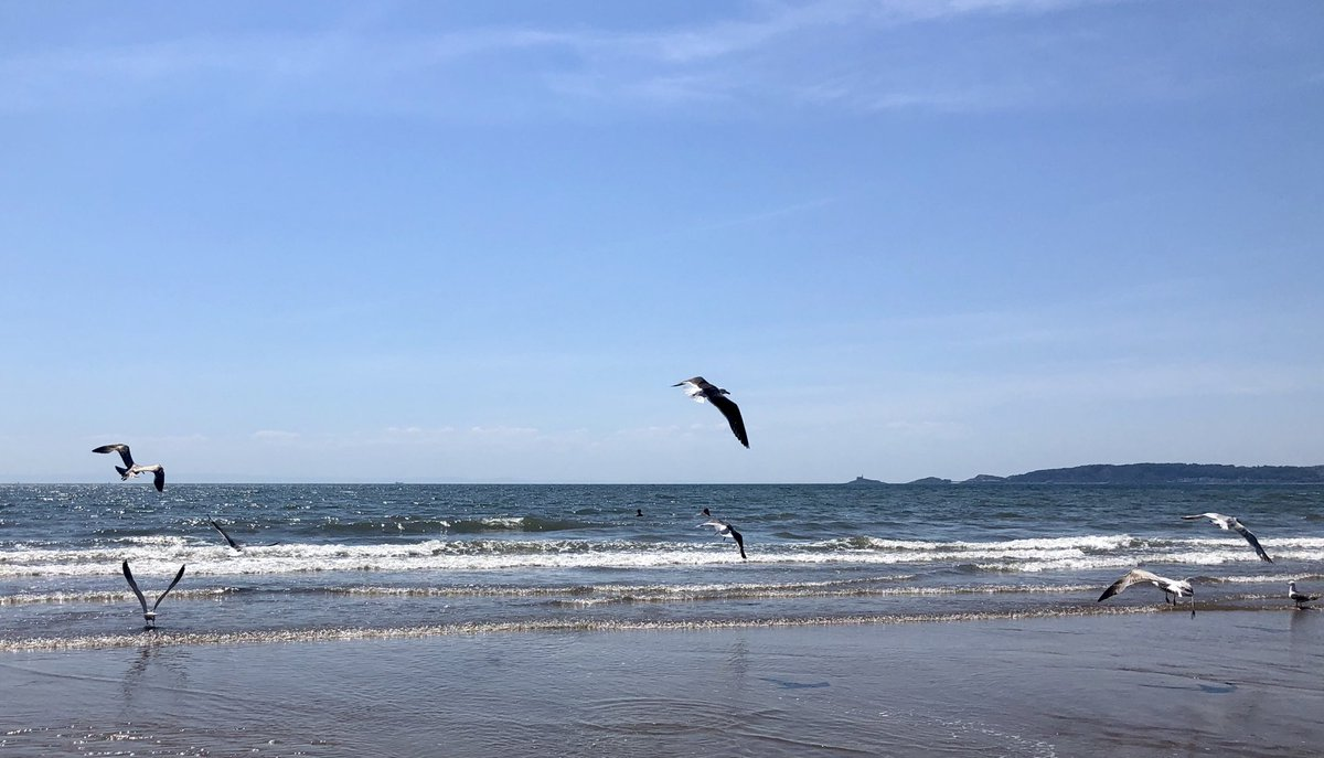 Happy Monday, folks   Gulls just wanna have fun.  #staysafe #socialdistance pic.twitter.com/RAL8BCSKqG