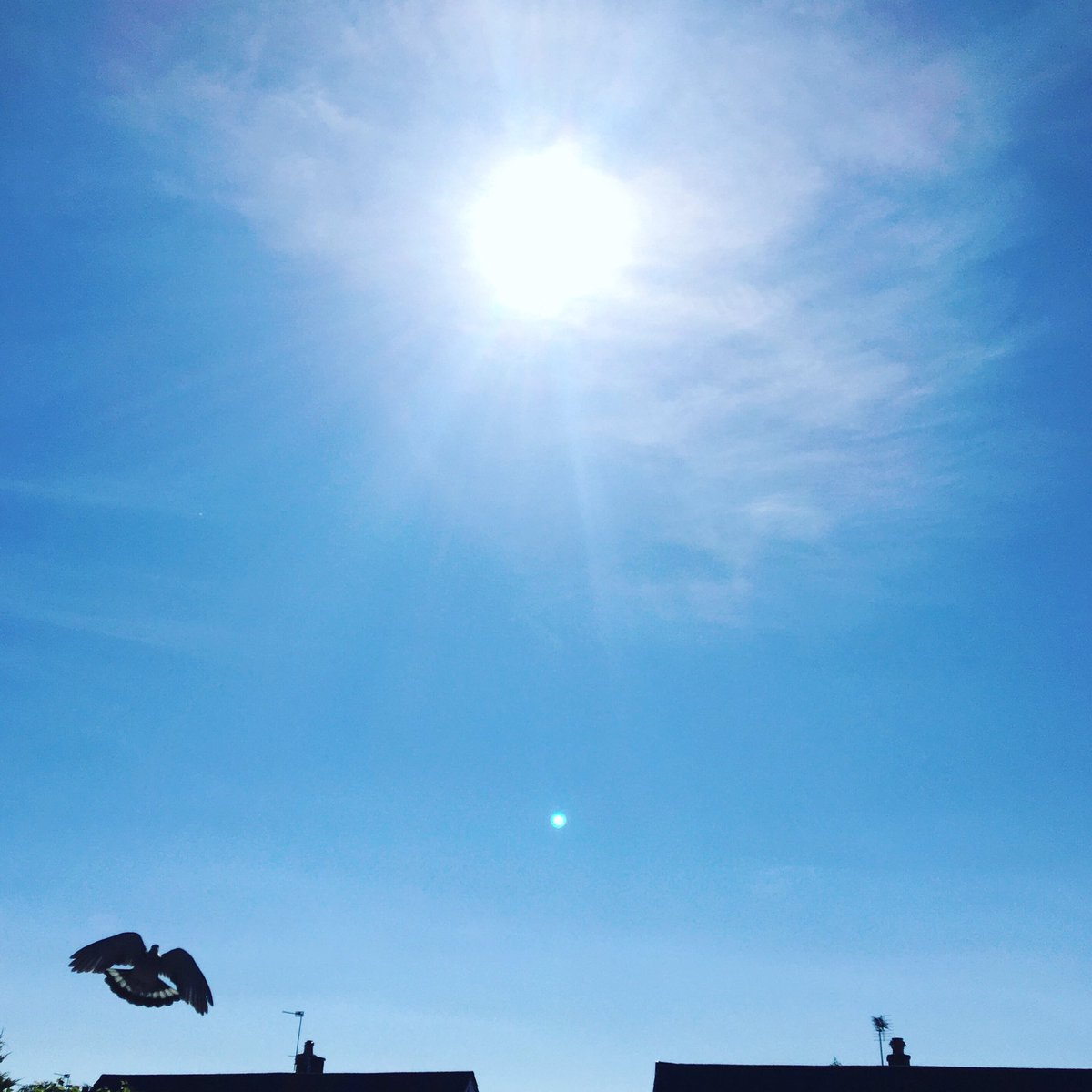 It's such a nice day, even the pigeons looks good!  Have a great week everybody!!  #mondaymotivation #workingfromhome #bluesky #actionshot #pigeon #flyingbird #sunshine #sunglare #happymonday #timeforacoffee