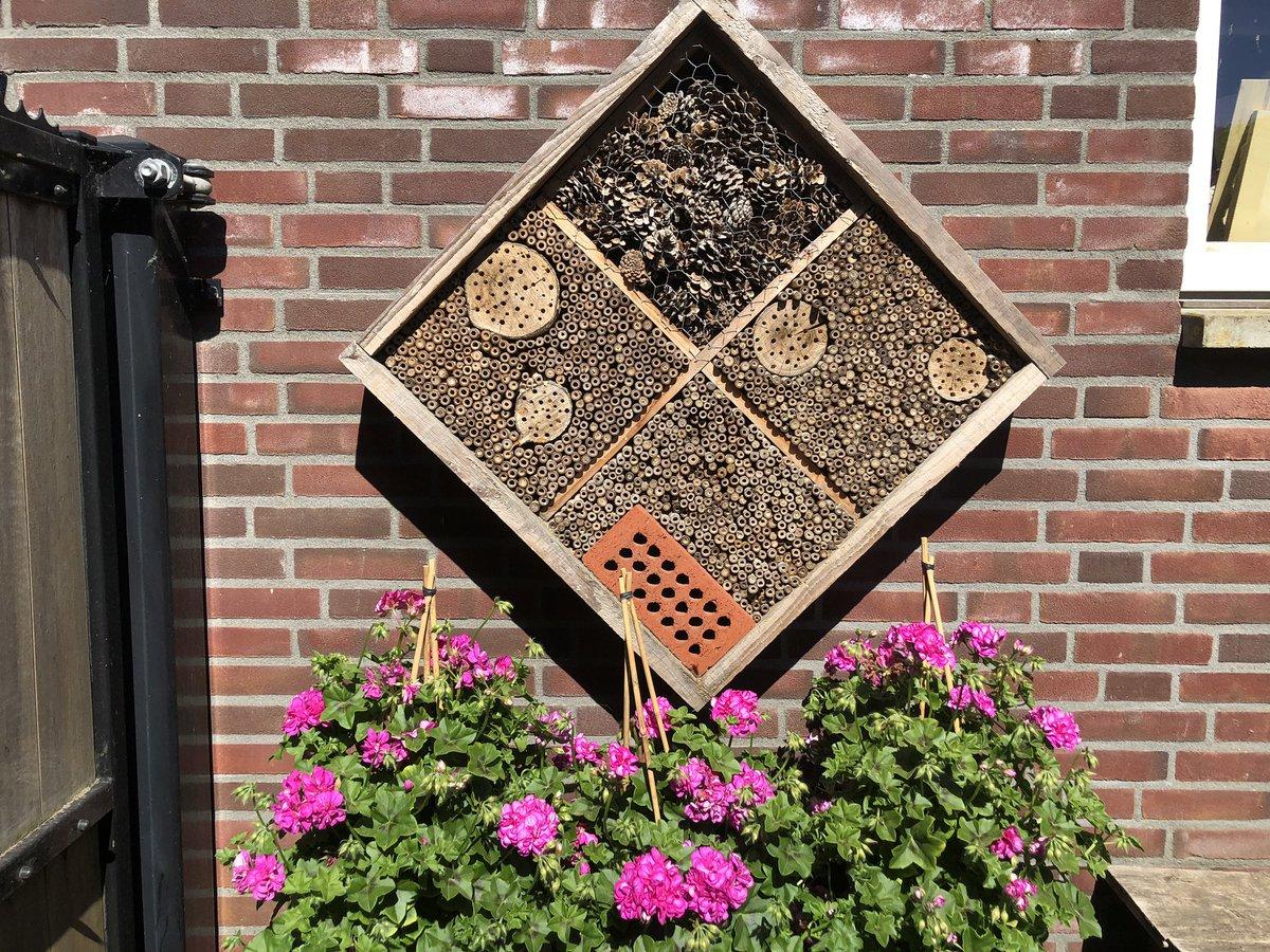 Fijne Pinksterdagen #bijenhotel #andrena #bijen #bestuivers #bloemen pic.twitter.com/YqhqtwBEZ6