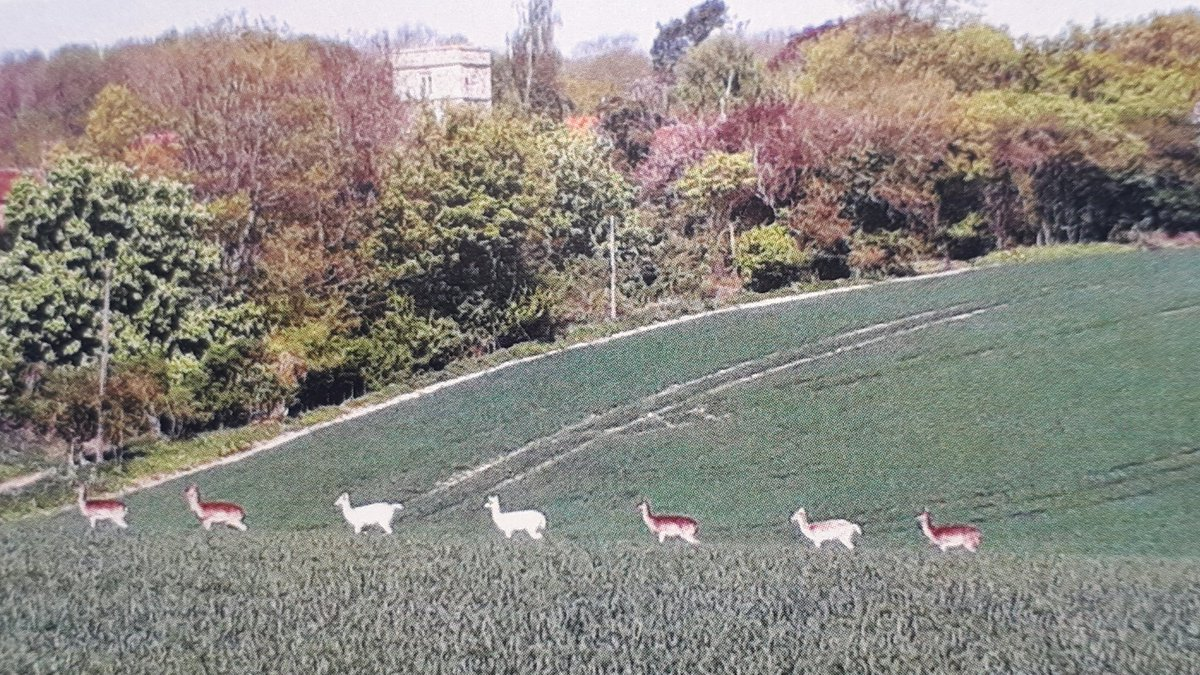 After a sunny weekend when many people seem to have completely forgotten about the threat of COVID19 it is nice to see that the local deer are still observing social distancing during their daily exercise! #COVID19 #SocialDistancing #Nature #CommonSense