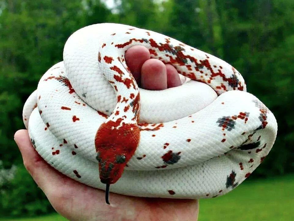 Bam Bam like a snake  thread #BamBam @BamBam1A<br>http://pic.twitter.com/ELNoy7x3Yf