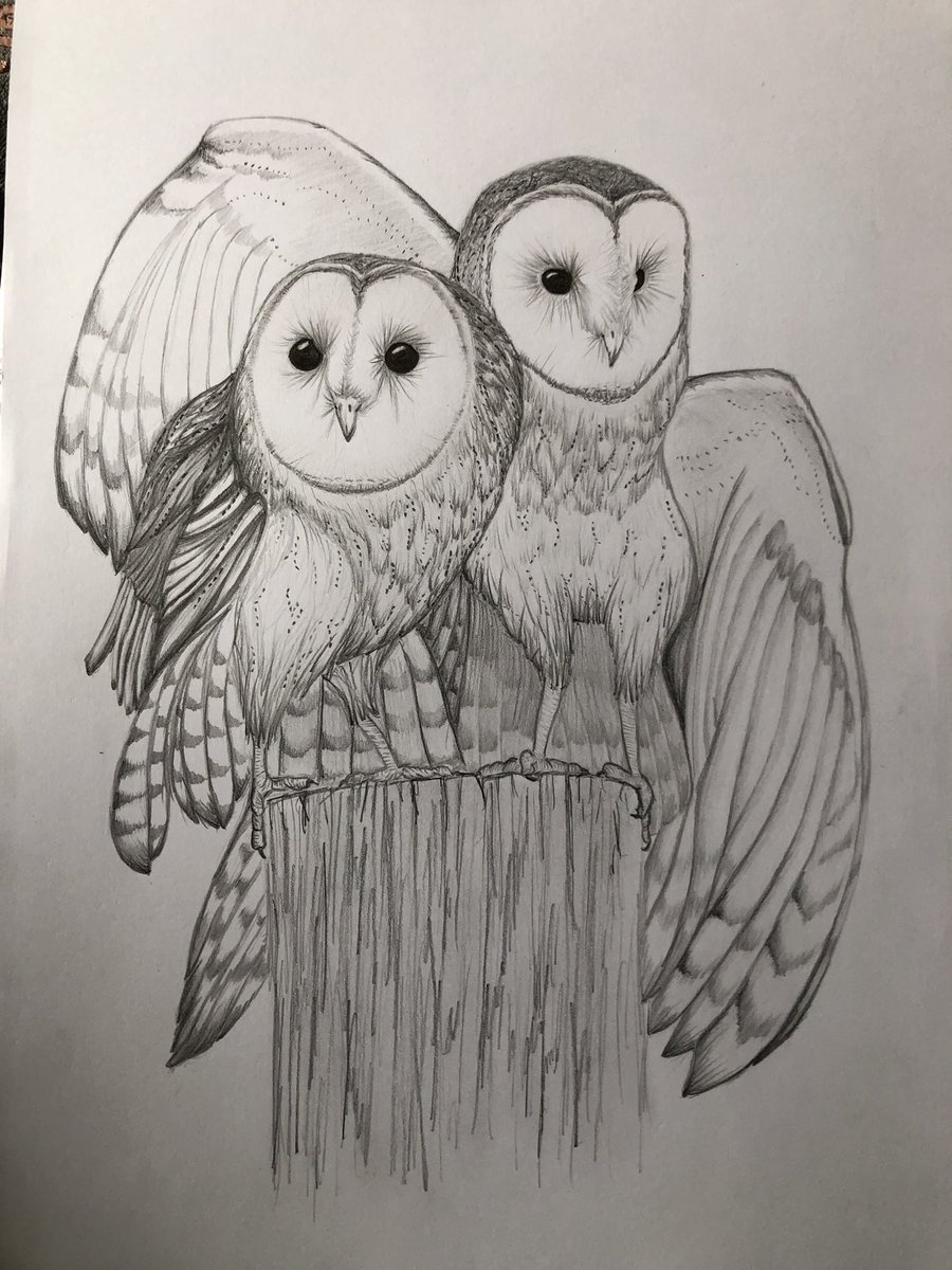 Family means everything 🥰 New Twitter account, would love some followers and inspiring artists to follow back #ArtistOnTwitter #pencilsketch #pencilart #artshare #drawingoftheday #Owls #sketchbook #Sketching #draweveryday #Art https://t.co/Vs2VfKbx2b