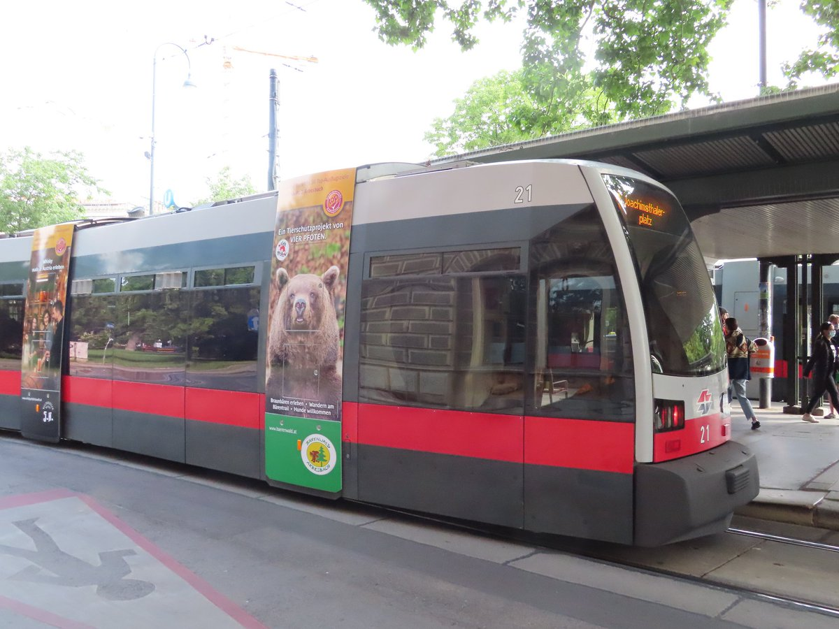 Erich-Bear goes by tram to ViennaIf you would like to visit Erich at our BEAR SANCTUARY Arbesbach, you can do so daily from 10 am till 6 pm  #Vienna #bears #Arbesbach #Austria pic.twitter.com/2rGNk1FJql