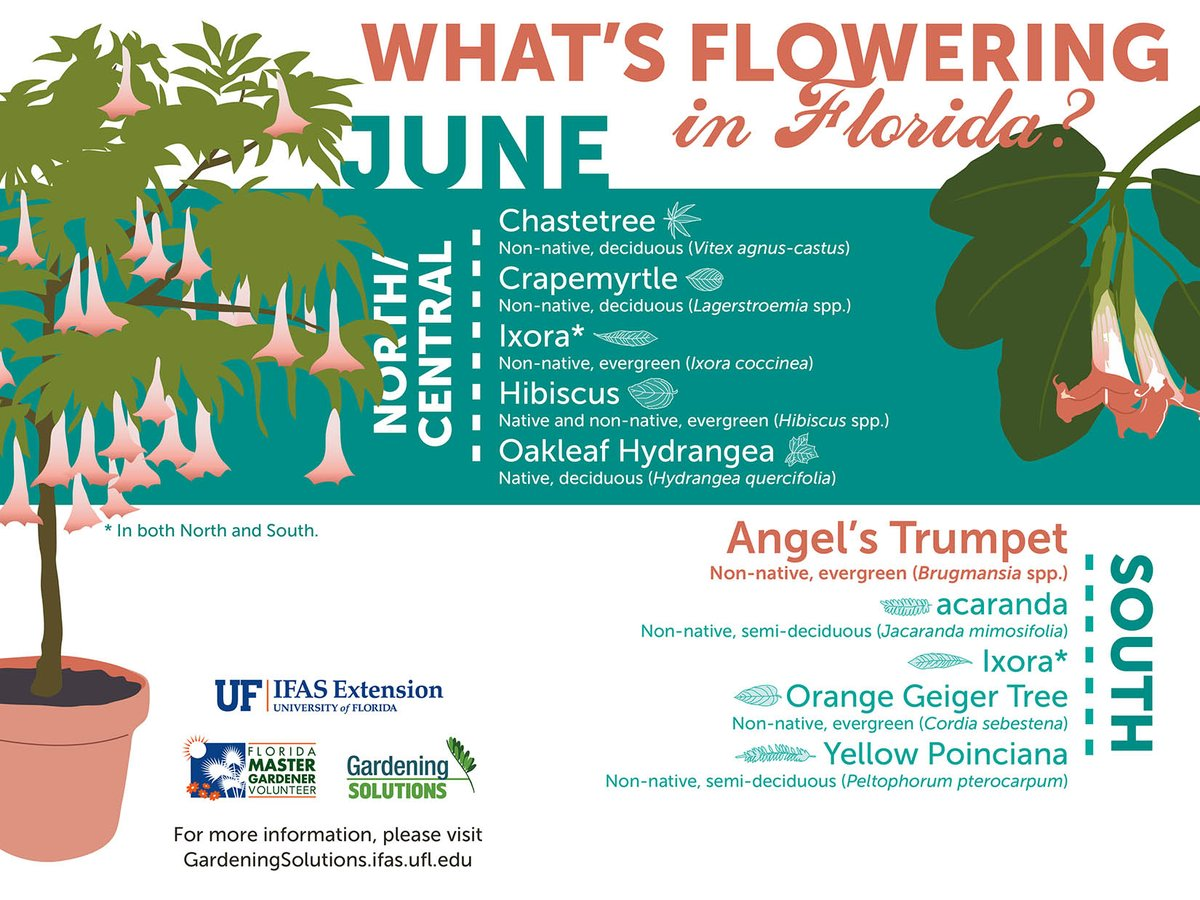Check out what is #FloweringinFlorida this month!