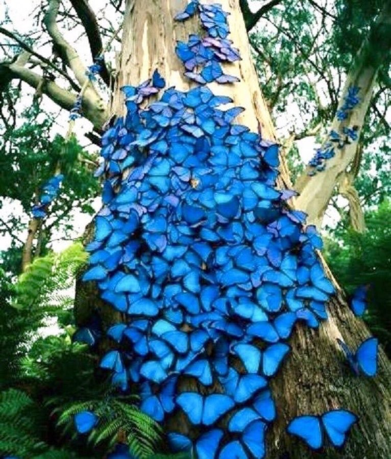 ❦Sometimes the colors of nature are all the heart needs to catch its breath and get its balance. ~Anne Scottlin #butterflies #blue #morph #nature #photo #CocoonDotOrg #breathepic.twitter.com/oxqOnJ9EjT