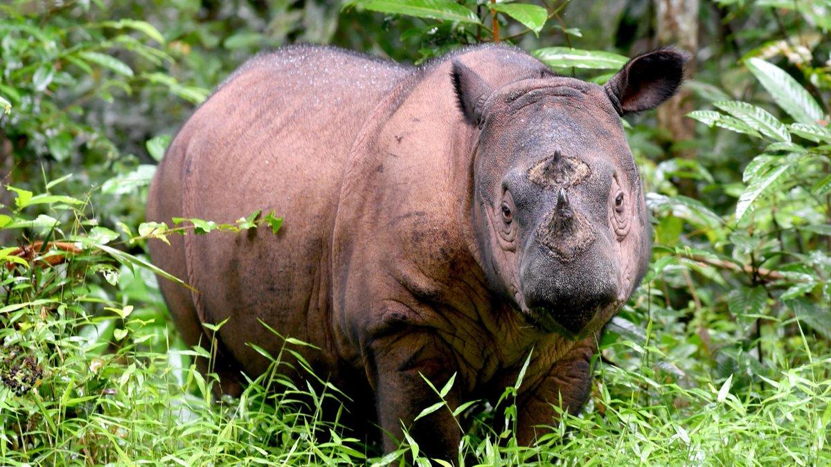 "More than 500 vertebrates on the brink of ""biological extinction"""