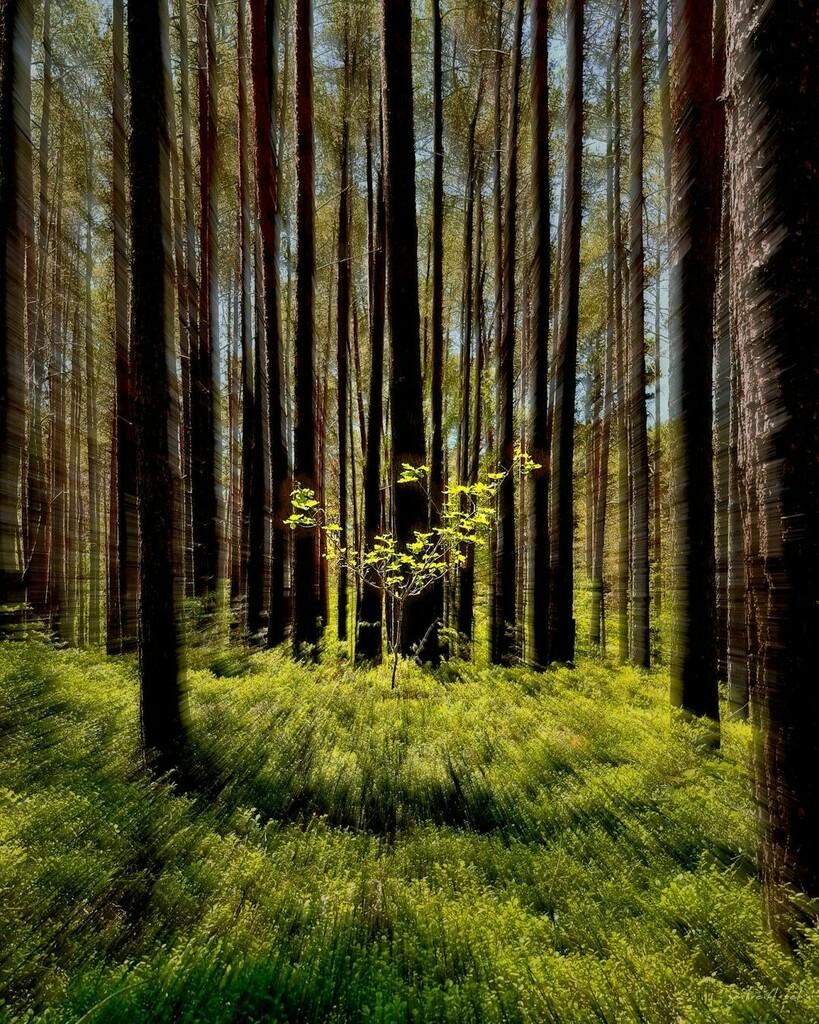 Er wächst noch.  #photooftheday #outdoor #green #springday #spring #photography #trees #mothernature #natur #outdoors #springtime #wald #optoutside #zooming #treestagram #naturegram #baum #bäume #picoftheday #zoomer #naturephotography #natureshots #getou… https://instagr.am/p/CA5a7vqFg2r/pic.twitter.com/ZlmXr3kf0d  by Andreas Rösler
