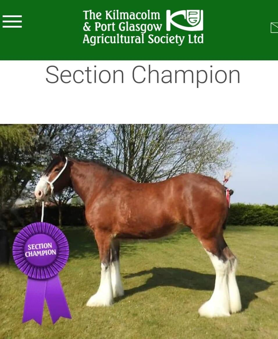 Kilmacolm online show 2020 saw our four-year-old mare Auchengree Amy take champion! pic.twitter.com/9Ojg8nI95J