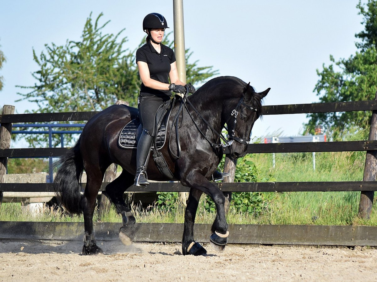 Forever amazed by my semi-retired oldie who still dances with me#equestrian #dressage pic.twitter.com/0VZ307XPSp