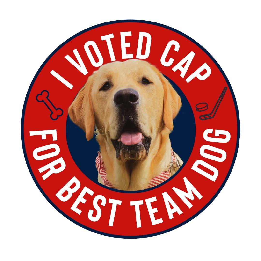 RT if u votedd mee for best @nhl team dog !!!