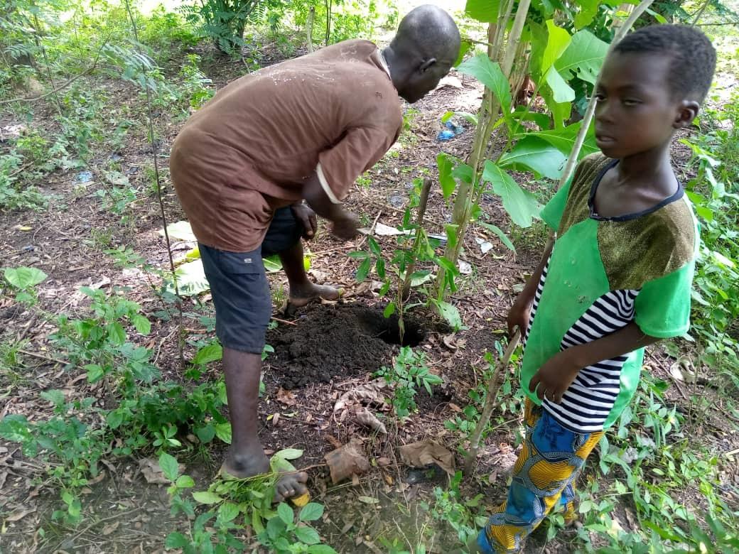 Faire de Gapé, la cité des arbres #fruitiers  Edem Koledzi, maître de Conférences au département de Chimie à l'Université de Lomé (#Togo) et responsable du mouvement 'GAPE DEBOUT' a une faiblesse pour les arbres fruitiers. #arbre #1erjuin @IFADfrancais   👉https://t.co/GgFX7UWxsZ https://t.co/OcasZBEuMD