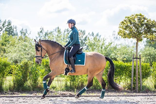 I can't believe that Equestrian Stockholm Amazonite has gone  I still get so many questions abo...: http://zpr.io/tWHPmpic.twitter.com/mkwbQQSuQN