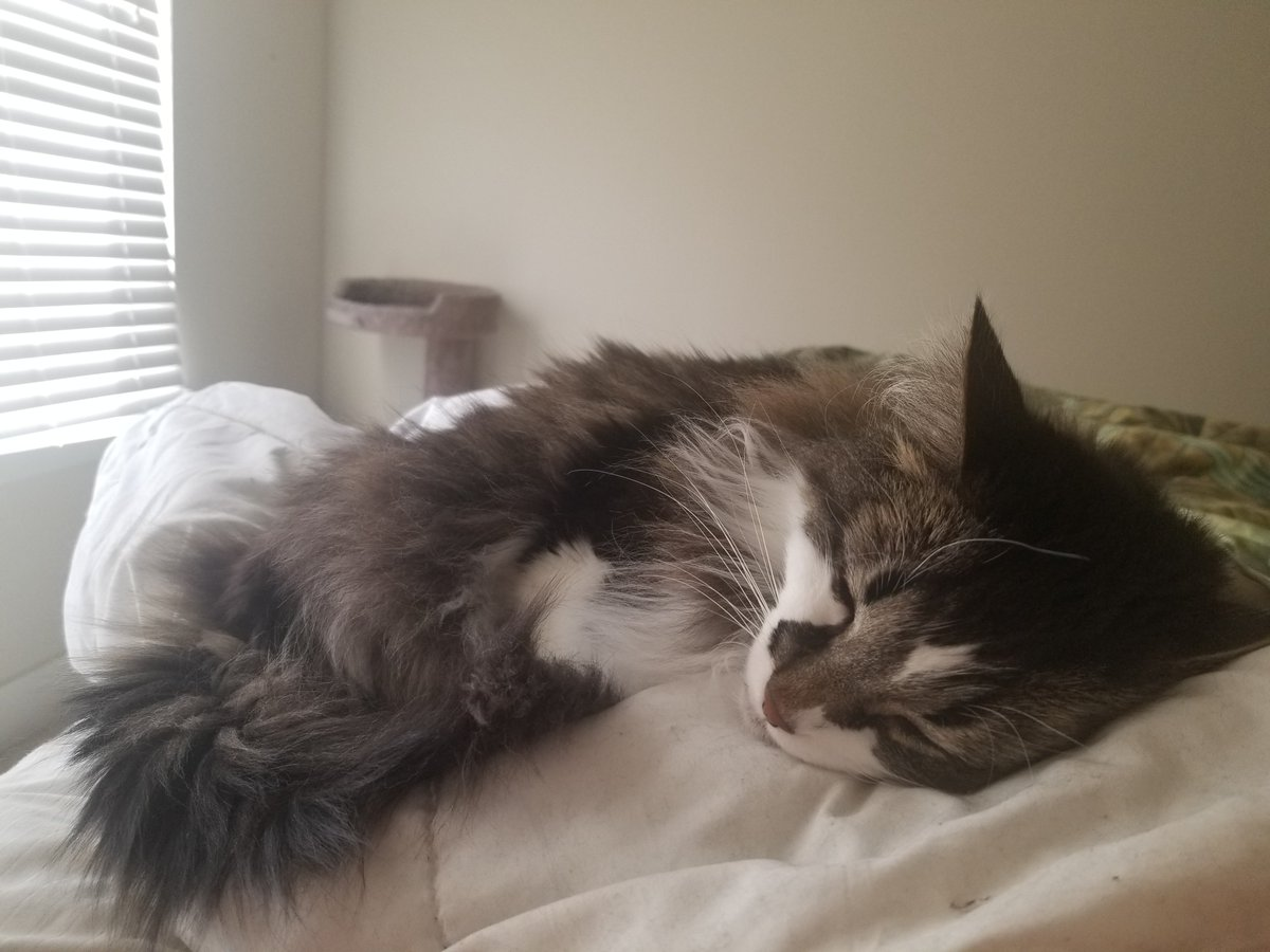 @KFFCats Bedtime Jasper: