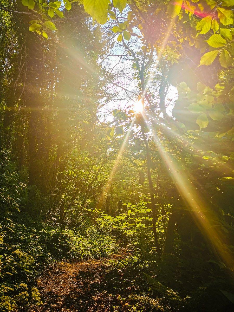 Into the woods  #lockdownwalk #walk #sunshine #rays #trees #woodland #inverness #highlands #scotland