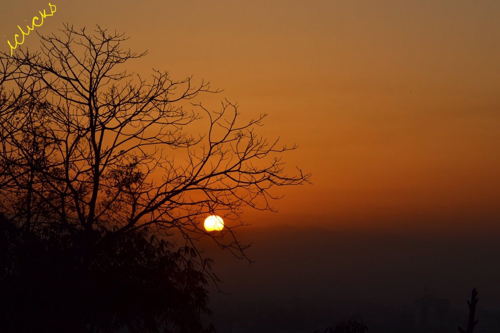 #Sunrise  #Morning #iClicks #LapsiTree