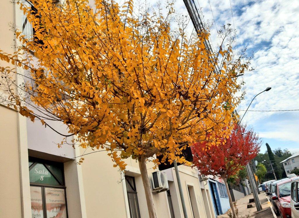 Andando e fotografando poraí! #Marau  #fotos #cores #harmonia #Pictures #trees #Beautiful