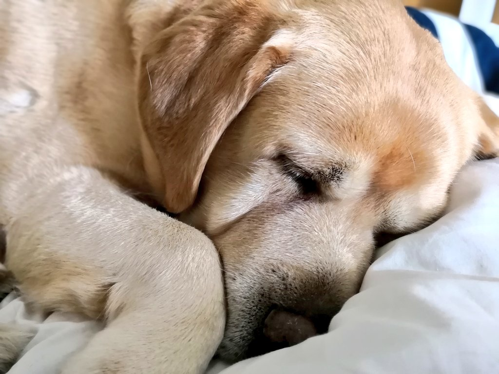 Good night Europe  Have a pleasant Monday my North and South American friends!  And have a pleasant tomorrow, my Asian and Oz friends x   #dogsoftwitter #dogs #Dog #dogsofinstagram #mondaythoughtspic.twitter.com/MvtS8swOzM
