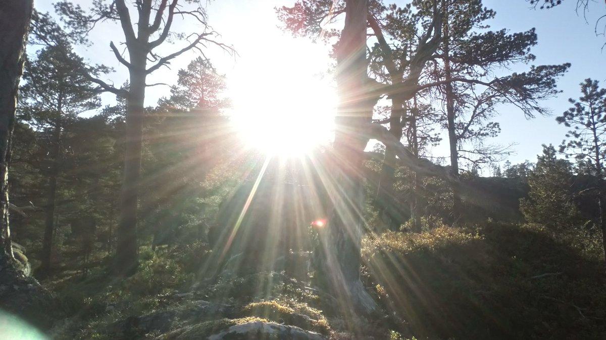 Sunshine day in the woods #nature #landscape #naturelovers #photography #woods #Weather #hikingpic.twitter.com/k2KwPoGRhU