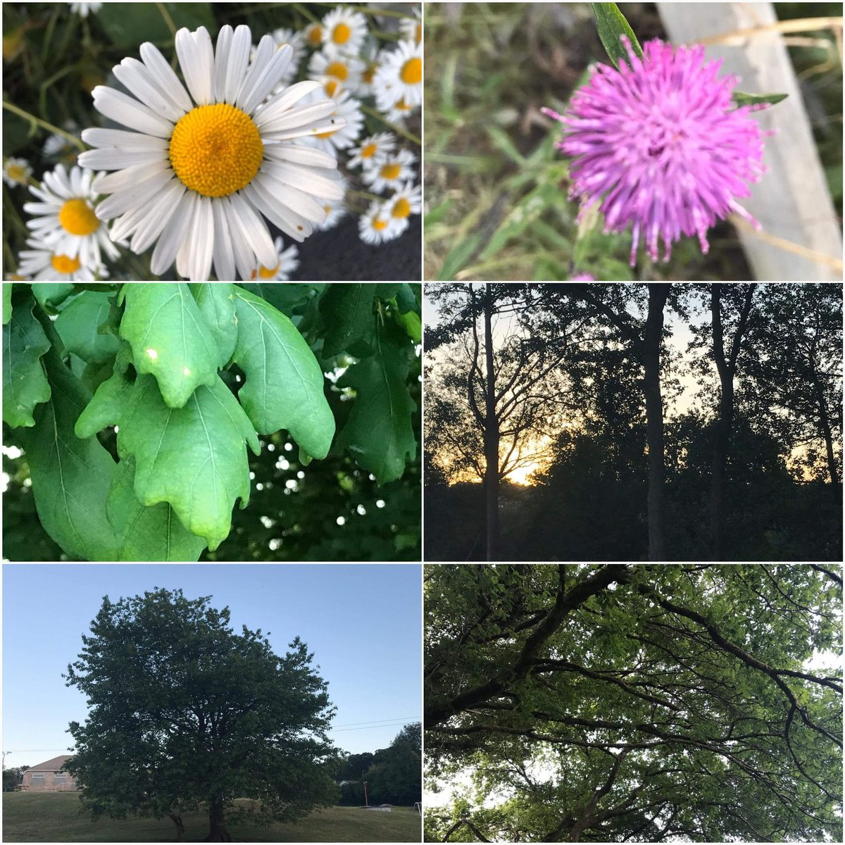 Feeling so blessed right now. Every time I walk the dog I notice something new 😊🐶❤🌳🌼#nature #NaturePhotography #trees #MondayMotivation #sunset #moon #walking #Wellbeing #COVIDー19 #lockdownuk #Health #Happiness #Peace #rest #recharge