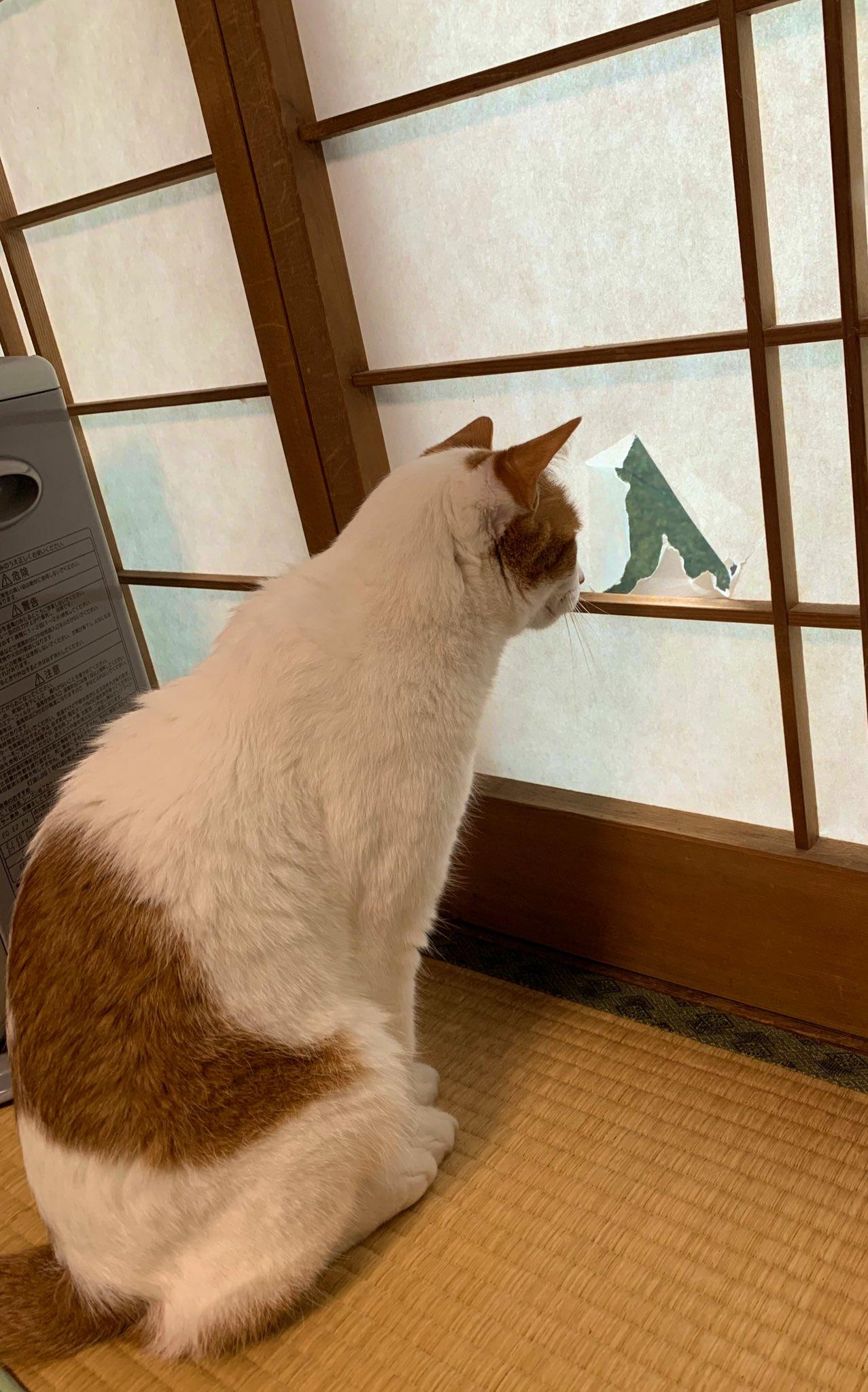 このやぶれた障子の穴は??猫用の窓になりましたww