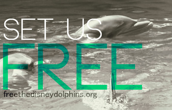 Help to Free the Disney Dolphins! Plz sign: http://www.change.org/en-GB/petitions/free-the-disney-dolphins … pic.twitter.com/VjX1WhpQKz