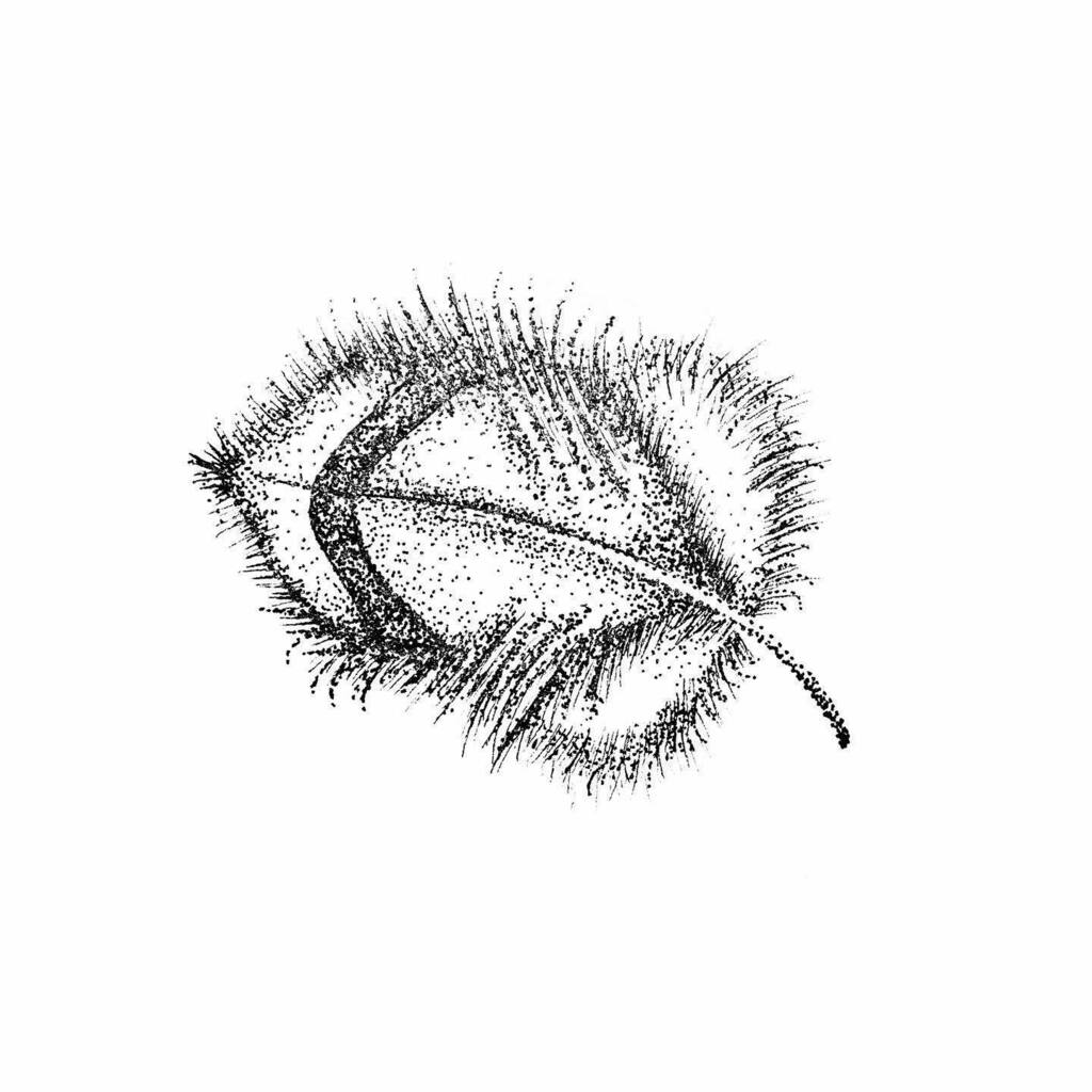 If you want to fly, give up everything that weighs you down. . . . . . . . . . #stipple #stippling #dotwork #lightweight #feather #pointillism #blackwork #pendrawing #penart #boho #stippleart #ink #inkwork #inkartist #blackpen #inkdrawing #inkillustratio… https://instagr.am/p/CA6P2X5nZ2j/pic.twitter.com/Cx41bShi8Z