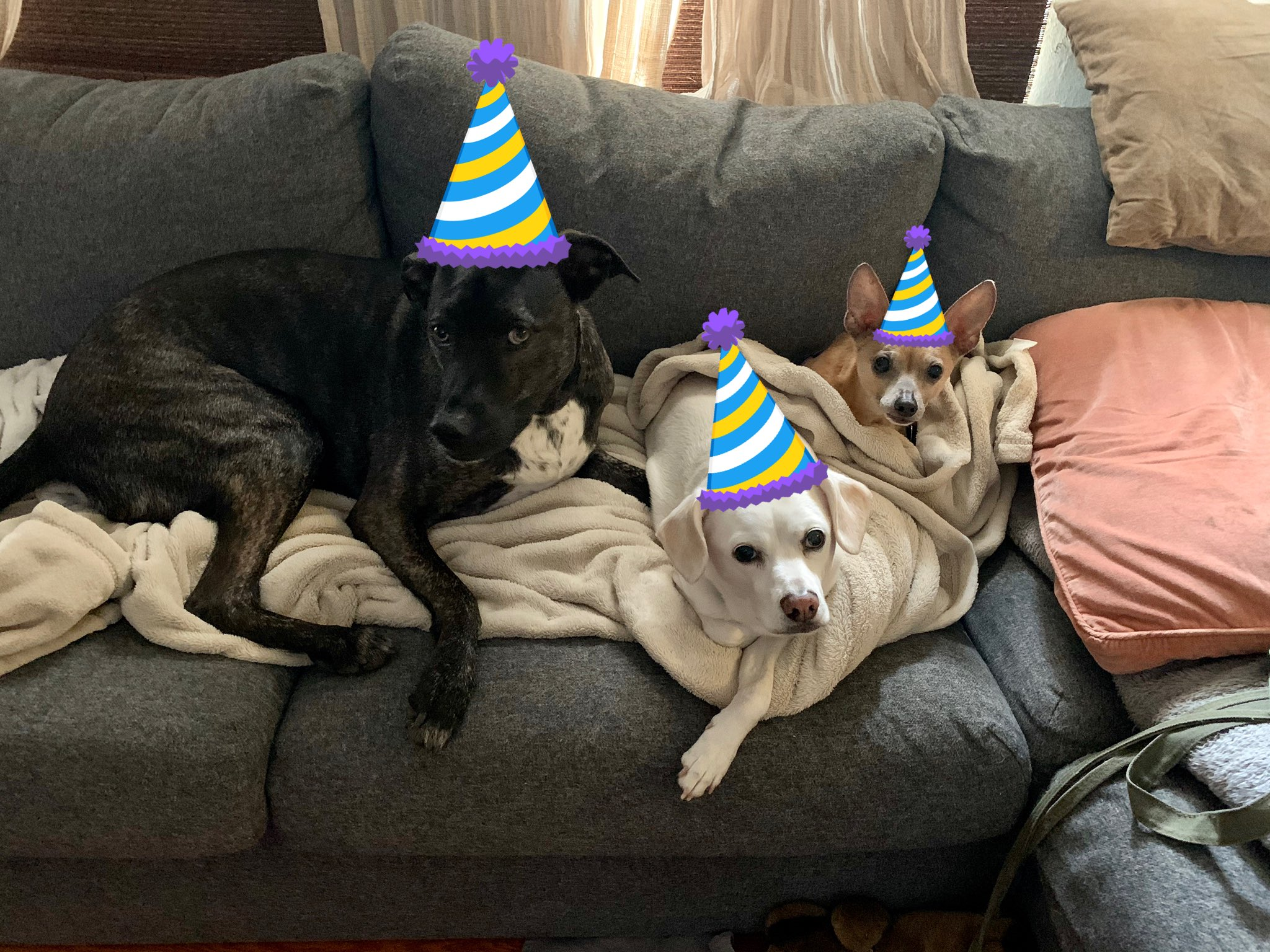 Happy Birthday to Prince from JB, Alice and Franklin!